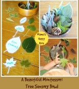Botany 101 for Toddlers:  Our Study of Trees