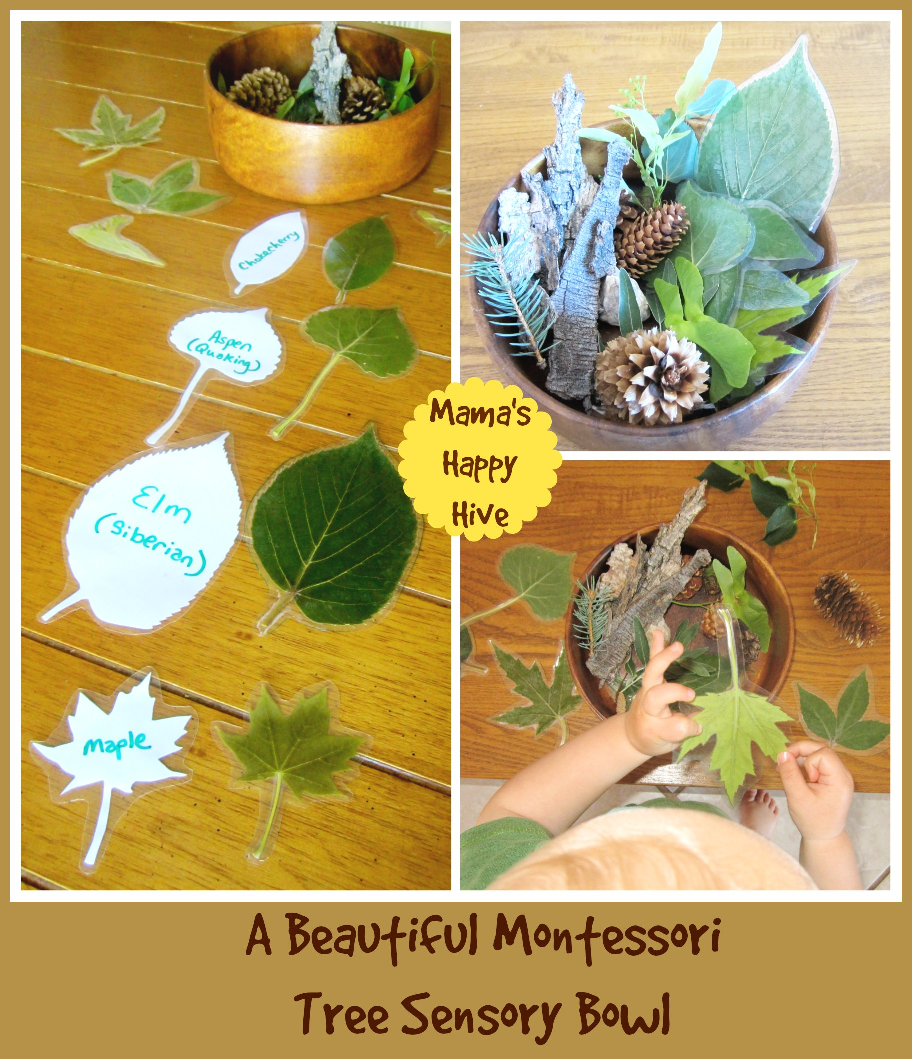 botany 101 for toddlers our study of trees mama u0027s happy hive
