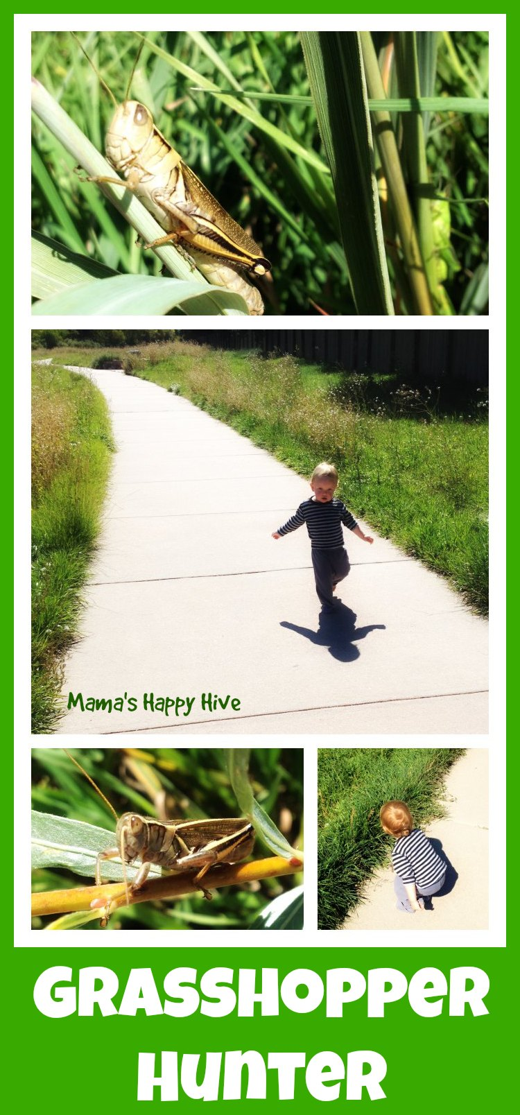 Grasshopper Hunter - www.mamashappyhive.com