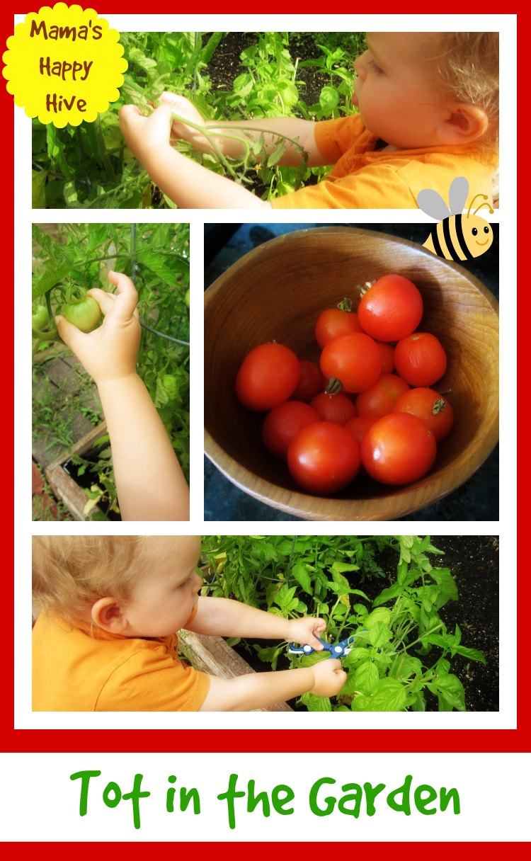 Tot in the Garden - www.mamashappyhive.com