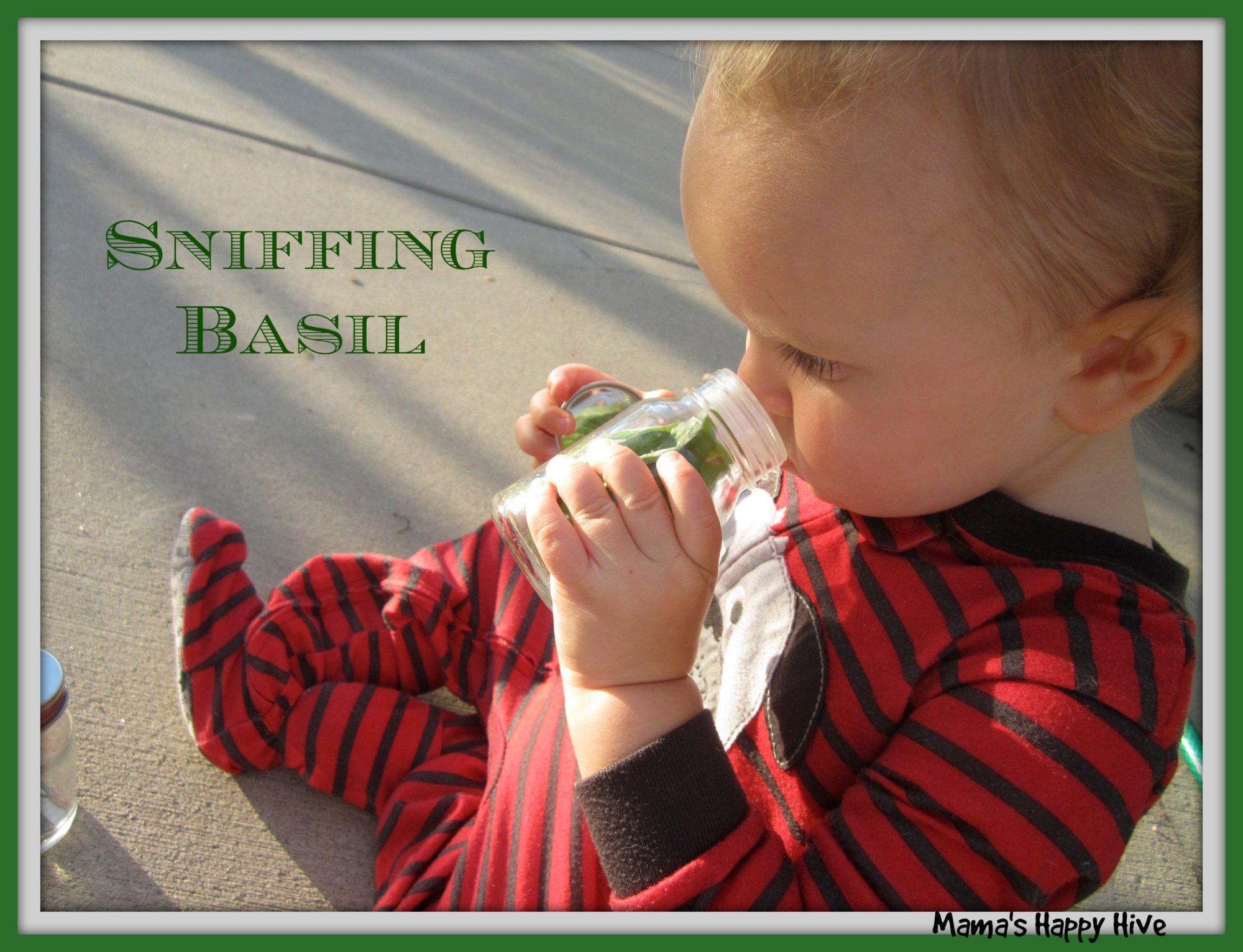 Sniffing Basil - www.mamashappyhive.com