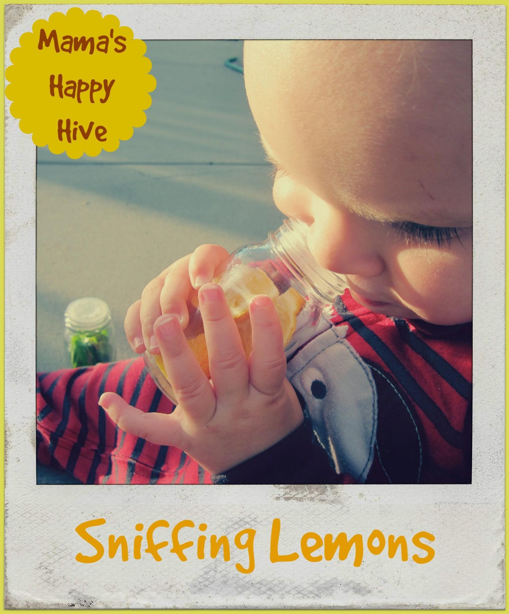 Sniffing Lemons - www.mamashappyhive.com
