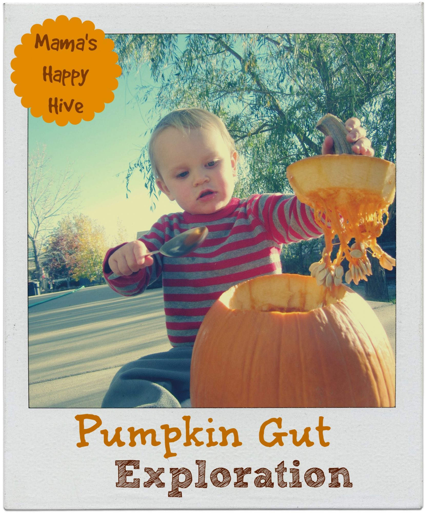 Pumpkin Gut Exploration 2 - www.mamashappyhive.com