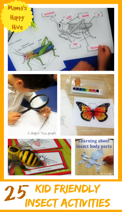 25 Kid Friendly Insect Activities And Printables Mama S
