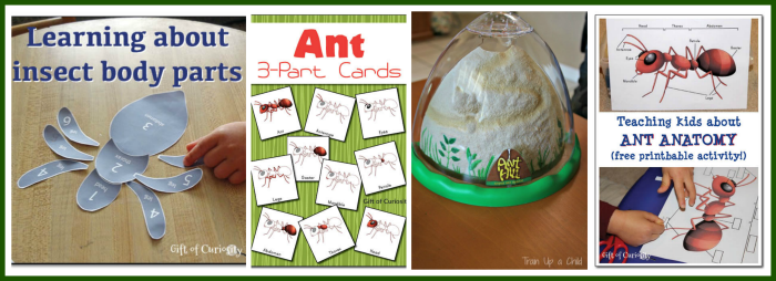 25 Kid Friendly Insect Activities and Printables