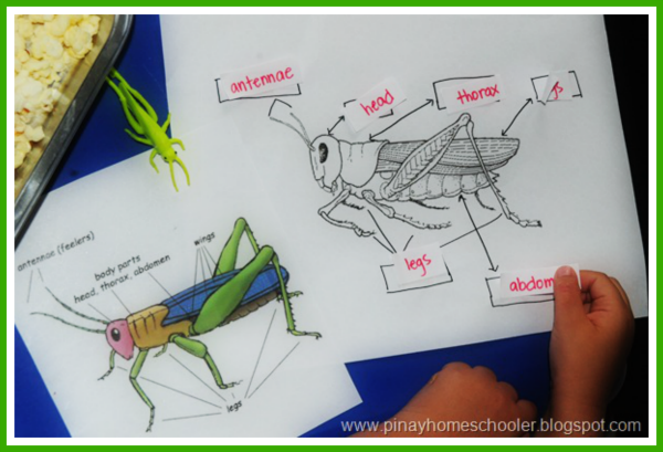 Grasshopper Roundup
