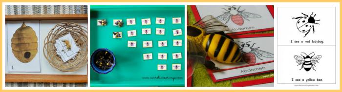 Honey Bee Roundup