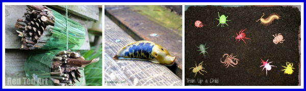Sensory Insects