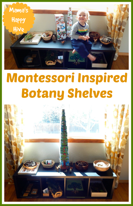 Montessori Inspired Botany Shelves - www.mamashappyhive.com