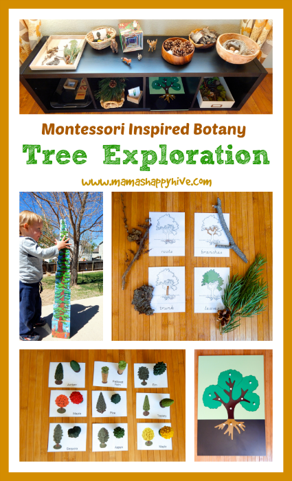 Montessori Inspired Botany Tree Exploration - www.mamashappyhive.com