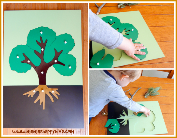 Montessori Inspired Botany Tree Exploration