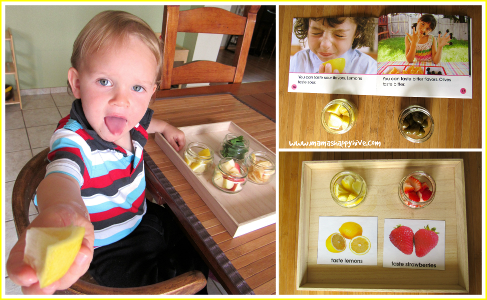 sensorial taste and dr montessori The montessori philosophy unlike traditional teaching methods, this style provides students with an interactive approach to learning that focuses on independent problem solving, self-discovery, and nature intensive learning.