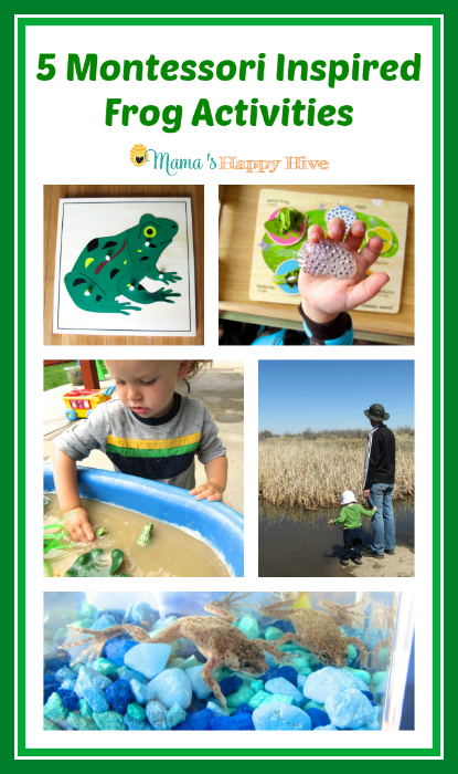 5 Montessori Inspired Frog Activities - www.mamashappyhive.com