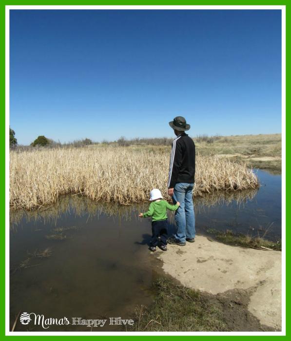 Frog Pond - www.mamashappyhive.com