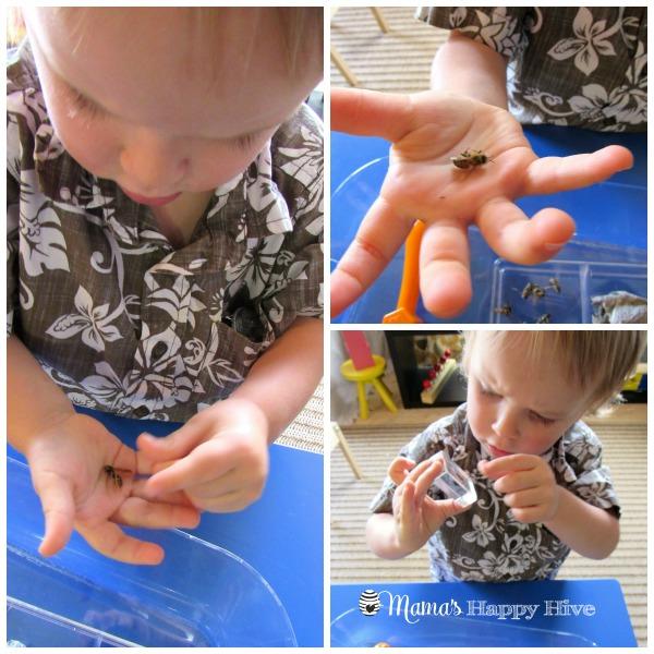 Bee Examination 2 - www.mamashappyhive.com