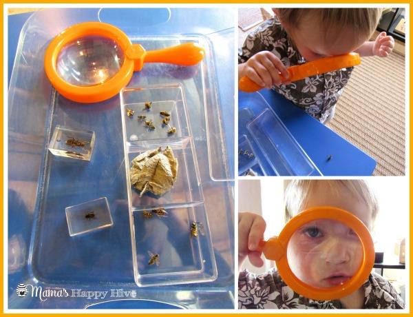 Bee Examination - www.mamashappyhive.com
