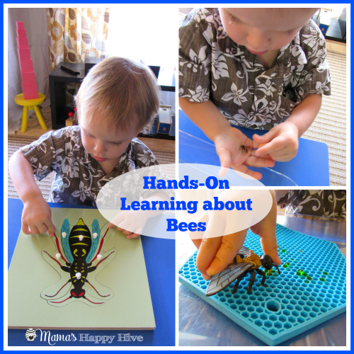 Hands-On Learning about Bees