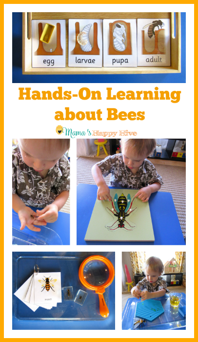 Please enjoy 8+ activities for hands-on learning about bees that include language work, fine & gross motor development, science, art, and more! - www.mamashappyhive.com