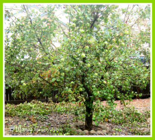 Apple Tree - www.mamashappyhive.com