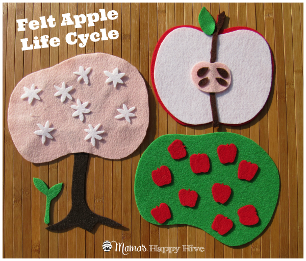A wonderful collection of Montessori inspired apple unit activities. This unit includes apple art, examining apple parts, apple life-cycle, and more. - www.mamashappyhive.com