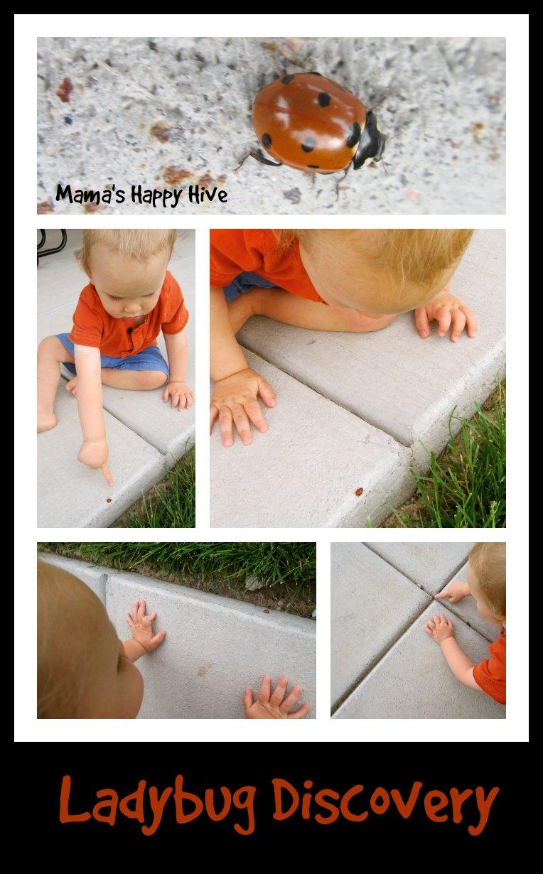 Ladybug-Discovery-www.mamashappyhive.com_.jpg