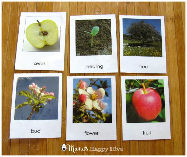 Life Cycle Cards - www.mamashappyhive.com