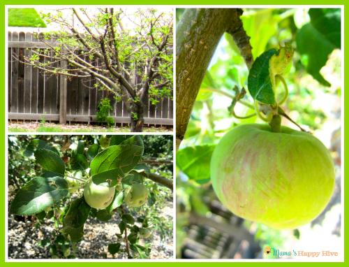 Real Apple Tree