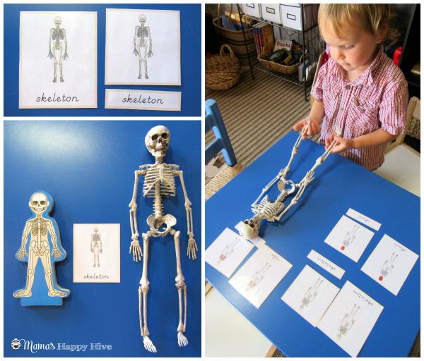 Skeleton - www.mamashappyhive.com