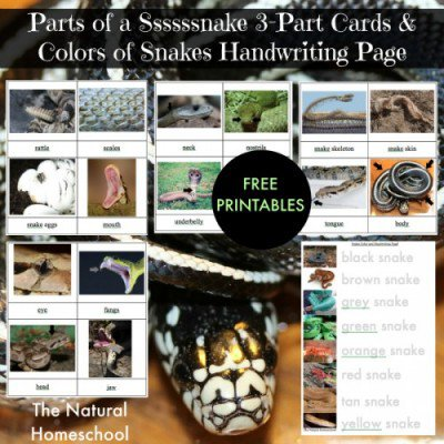 snake-pin-1-e1445460698322