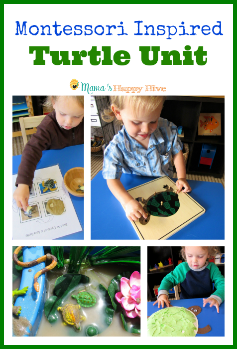 Montessori Inspired Turtle Unit