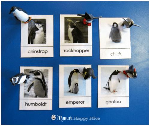 6 Penguins (med)