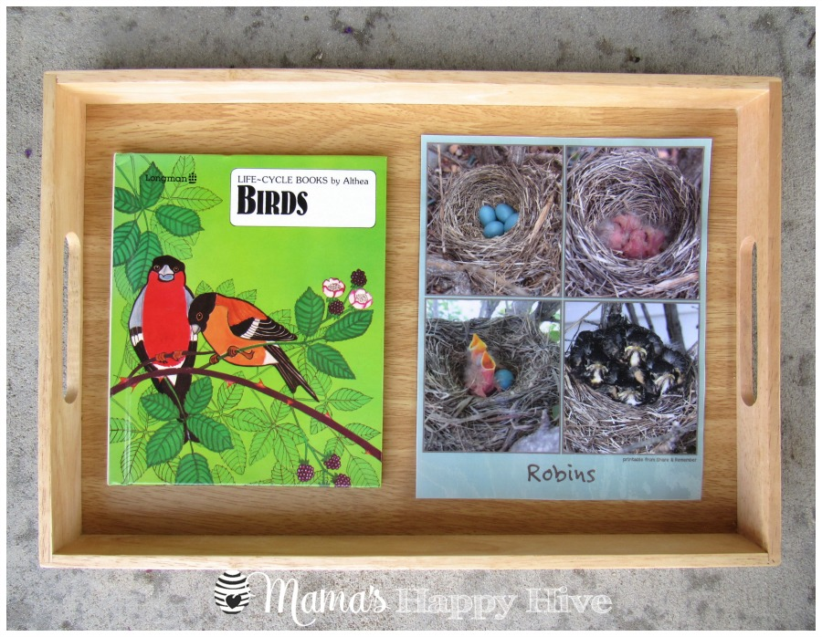 Bird Life-Cycle - www.mamashappyhive.com