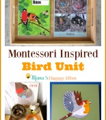 Montessori Inspired Bird Unit