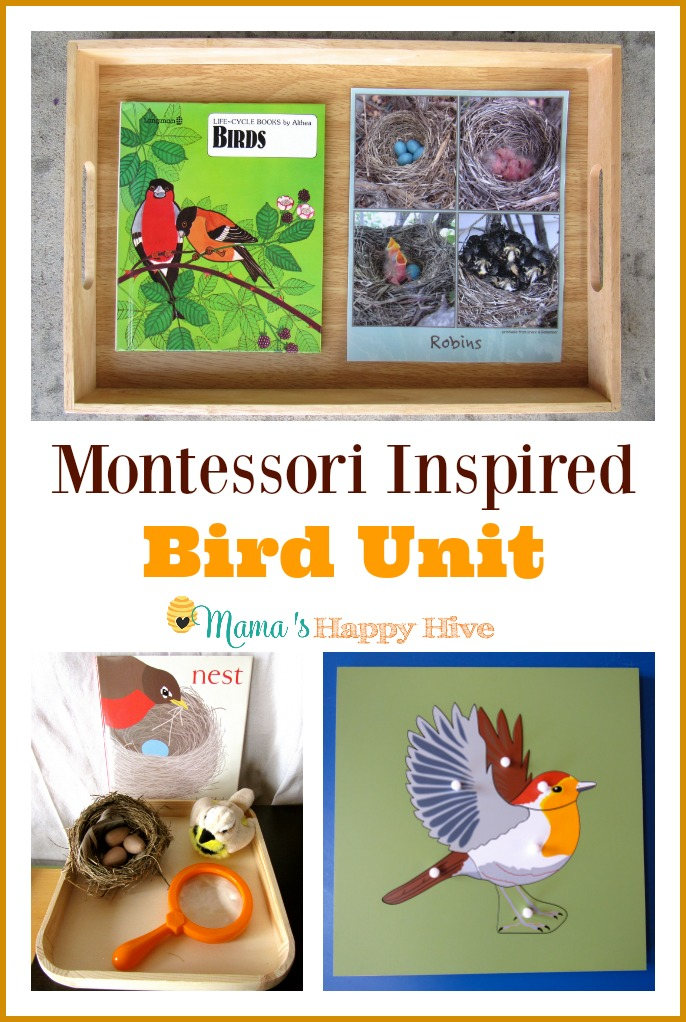 Montessori Inspired Bird Unit includes life-cycle of birds, Montessori bird puzzle, examining a nest, DIY bird feeder, pre-reading work, and practical life. - www.mamashappyhive.com