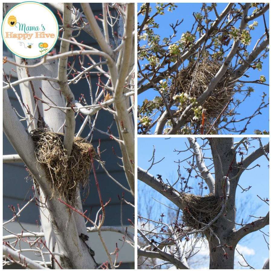 Real Nests - www.mamashappyhive.com