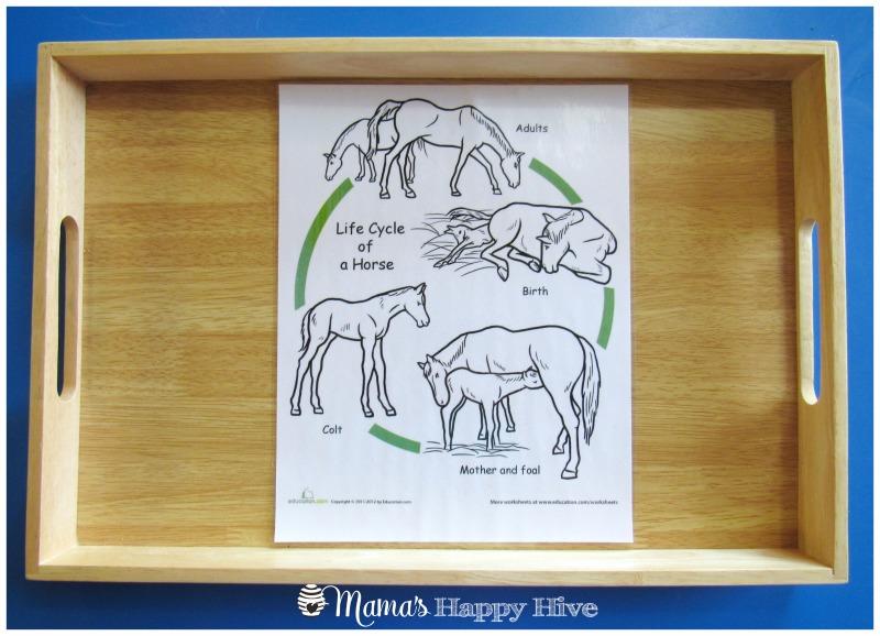 Horse Life-Cycle - www.mamashappyhive.com