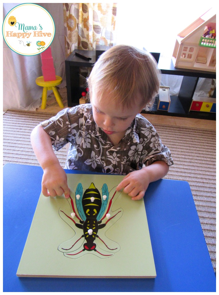 Our favorite Montessori materials are zoology puzzles. The puzzles teach a hands-on approach for the five main Montessori classes of vertebrates. - www.mamashappyhive.com