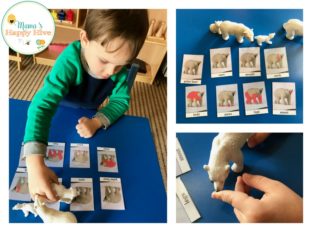 Polar Bear Cards