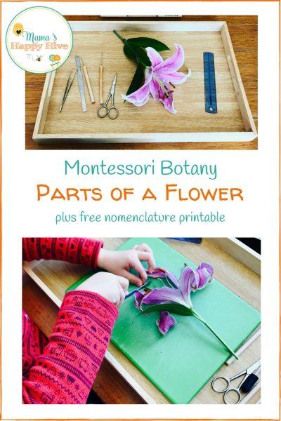 Montessori Botany: Parts of a Flower