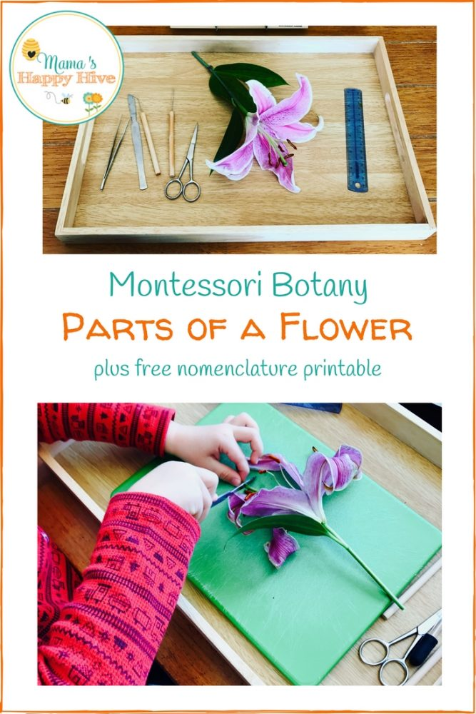 Free botany unit study