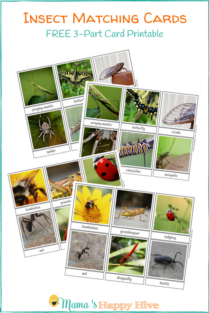 free insect matching 3