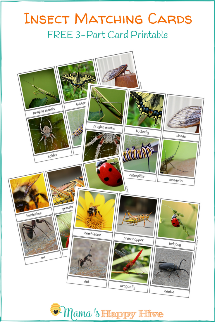 Free Insect Matching 3-Part Card Printable