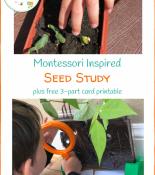 Montessori Inspired Seed Study