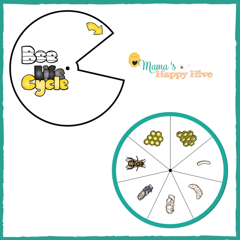 Honey Bee Life-Cycle Spinner Printable