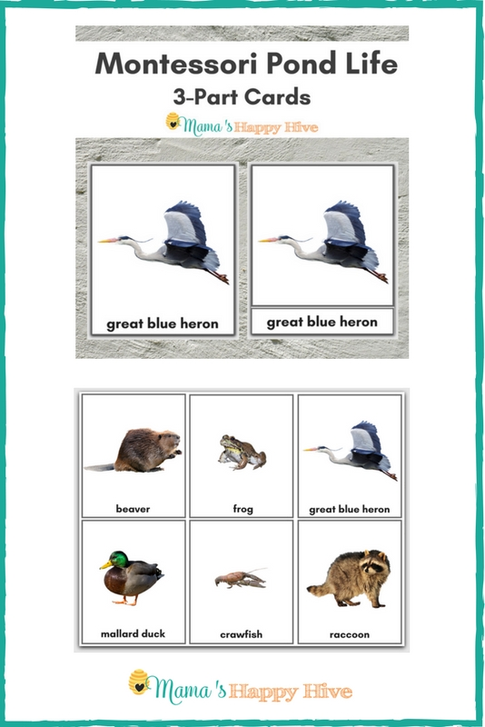 Pond Life 3-Part Cards Printable