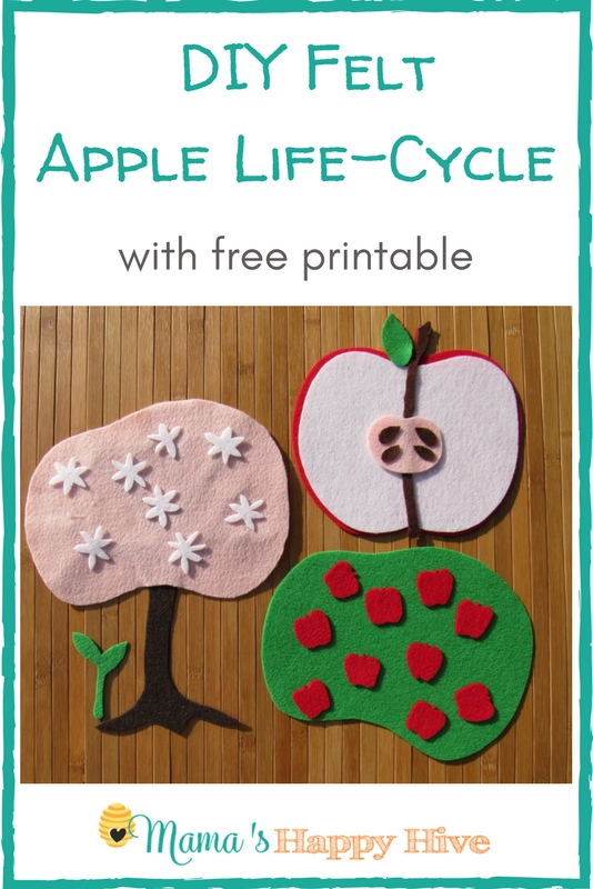 A beautiful DIY felt apple life cycle activity with free printable. Enjoy hands-on learning about the parts of the apple and its life cycle. - www.mamashappyhive.com