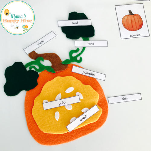 diy felt pumpkin parts and life cycle with printablesdownload your free pumpkin parts printable and diagram by clicking the link below