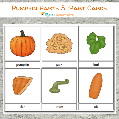 picture regarding Pumpkin Life Cycle Printable named Do-it-yourself Felt Pumpkin Components and Daily life Cycle with Printables