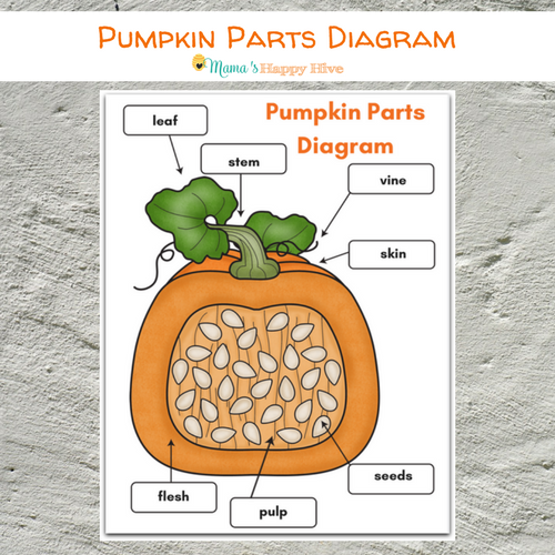 photo relating to Life Cycle of a Pumpkin Printable titled Do it yourself Felt Pumpkin Components and Daily life Cycle with Printables