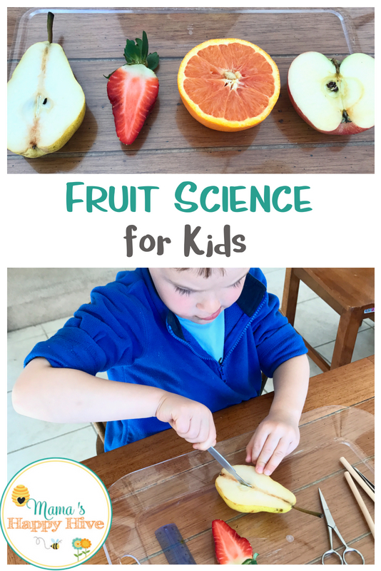 This is a fruit science for kids lesson that identifies the various structures of the fruit, compares and contrasts different fruit seeds, includes dissecting work, matching work, and a lovely spiritual lesson at the end. - www.mamashappyhive.com
